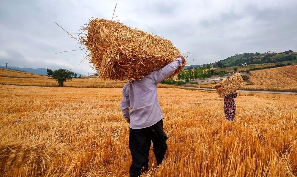 اُفت 20 درصدی خرید تضمینی گندم، قاچاق گندم توجیه مالی ندارد