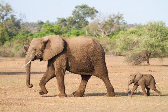بهترین مادران در دنیای حیوانات