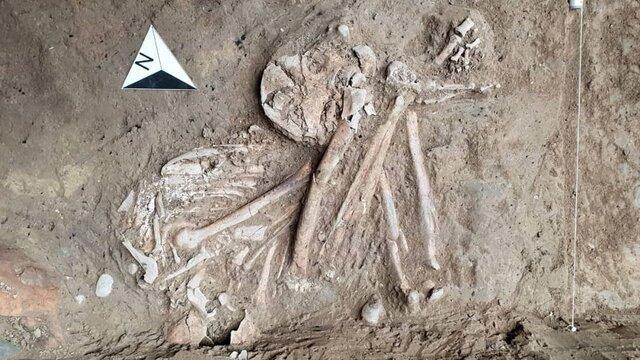 بابل یک صفحه سفید در مطالعات باستان شناسی در کشور است