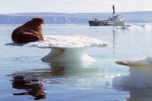 تغییرات ناگهانی و غیرقابل برگشت در قطب شمال