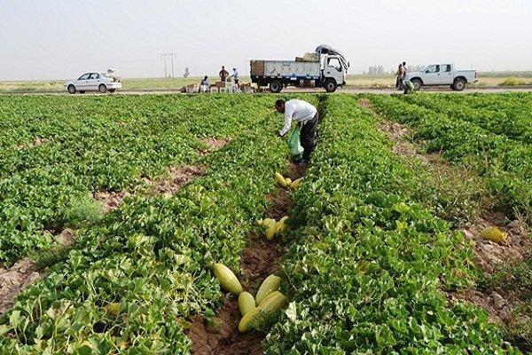 پیش بینی برداشت 8 هزار تن محصولات جالیزی در شهرستان طبس