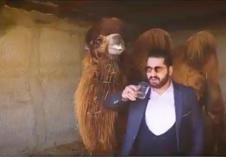 (ویدیو) ماجرای جنجالی درمان کرونا با ادرار شتر؛ ادرار شتر در اسلام چه حکمی دارد؟