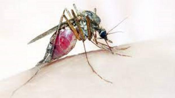 تشخیص فوری مالاریا با فناوری جدید